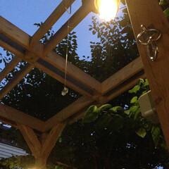 パーゴラ/サンキャッチャー/マリンランプ/既存樹 夕空に照明が灯り木々の影を映し、サンキャ…