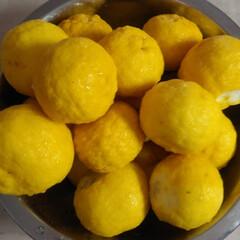 ジャム作り/柚子 たくさん頂いた柚子~🍊🍊 柚子ジャムにし…