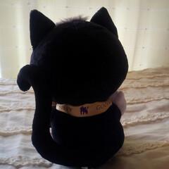 お嫁ちゃんからプレゼント/キティちゃん/黒猫/ハロウィーン キュートな後ろ姿⁉️ そろそろハロウィン…
