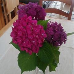 セルフネイル/パープル/ベッドサイド/紫陽花/雨季ウキフォト投稿キャンペーン お庭に咲いた紫陽花を頂きました💠 一輪は…