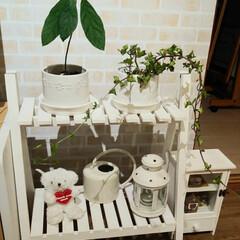 植替え/アボカドの種/サリュ雑貨/IKEA雑貨/植木鉢/ダイソー/... 白いもの集めてみた♪ DAISOの陶器の…