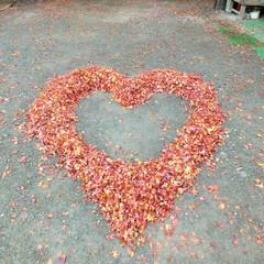 朱色/ハート/落葉 落ち葉で作る朱色のハートはとても暖かく感…