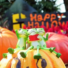 ハロウィン/カエル/ハロウィン2019 Happy Halloween!!  カ…