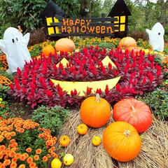 ハロウィン/かぼちゃ/ハロウィン2019 Happy Halloween!!  大…