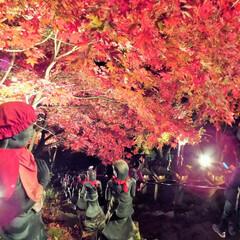 朱色/地蔵/ライトラップ/紅葉/もみじ 朱色を纏う地蔵が眺める夜のもみじ