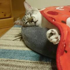 ニトリ Nウォームベッドで爆睡
