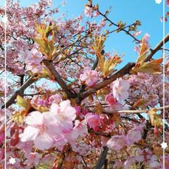 風景/桜色/セブンイレブン/カフェラテ/パンケーキ/おでかけ/... ドライブ日和☀で近間をウロウロ~🚙🎶 綺…