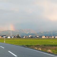 虹🌈次はいつ見れるかな/風景/虹/美味しい/冷食/ミラノ風ドリア 先日、仕事帰りの虹🌈(♡ºัºั♡)💓 …