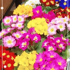 お花屋さん/お花/おでかけ/おすすめアイテム/暮らし/フォロー大歓迎 可愛いお花💠🌼(*´∀`*)ノ💐 150…