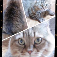 猫好き/猫/おでかけ/暮らし/フォロー大歓迎 実家のおばあちゃん猫の モンちゃんです(…