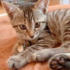 私も飼いたいよ/可愛い/子猫/猫ちゃん/暮らし 友達の家の子猫ちゃん(=^_^=)💓 最…