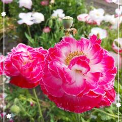 可愛くなりたい♡/可愛い/お花/プリンだよ♡/ローソン/ケーキプリン とっても可愛いお花🌼(*´ω`*)🌼 名…