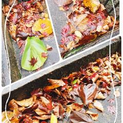 落とし物早めに取りに来てね✋/落ち葉/紅葉/ファミマ/朝食/パン/... 今朝のうちの🏠玄関ポーチ🍂🍁🍃 落ち葉の…