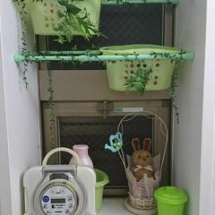 フェイク グリーン/突っ張り棒/100均/住まい 我が家の 浴室は グリーン でまとめて…