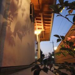 玄関/夜景/アプローチ/癒し/植栽/影/... 家族の帰りを迎える夜景アプローチ。