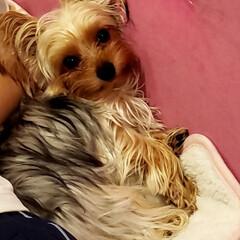 愛犬 眠いみたい😅