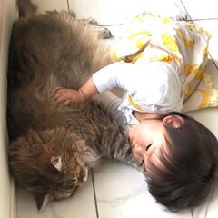 子守/巨大猫/むにゃげーず/みみげーず/サイベリアン/LIMIAペット同好会/... お昼寝💖