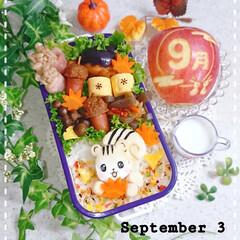 りんご飾り切り/手作り弁当/お弁当/りす弁当/秋弁当/お昼ごはん/... 今日の娘弁当🍀