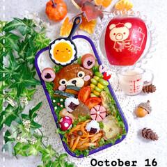 うずら卵の目玉焼き/りんご飾り切り/手作り弁当/ランチ/お昼ごはん/くまちゃん弁当/... 今日の娘弁当です❤️ くまちゃんハンバー…