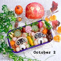 おにぎり弁当/たぬき/りんご飾り切り/秋弁当/たぬき弁当/娘弁当/... 今日の娘弁当です😍