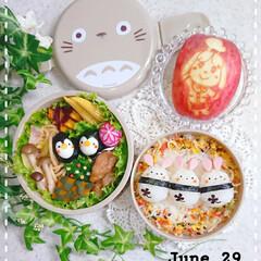 お弁当/お昼ごはん/ラディッシュ飾り切り/りんご飾り切り/うずらの卵/うさぎ弁当/... 今日の娘のお弁当です😃