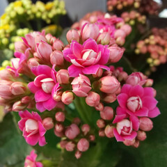 lovely/beautiful/cute/flowers/可愛い花/カワイイ/... ストレス解消には、ささやかな事を楽しむ事。