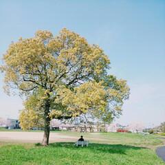 お散歩/天気いい/青空/公園/散歩/日光浴 お散歩コース 日光浴=ビタミンD