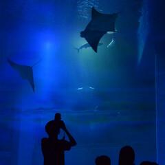 カメラ好き/一眼レフ/水族館/令和の一枚/LIMIAファンクラブ/LIMIAおでかけ部/... 水族館へ行ってきました♪
