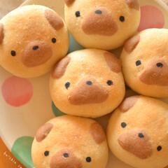 おうちパン/パン作り/わんこ/パグ/パン焼きました/LIMIAごはんクラブ/... パグちゃんパン焼きましたU・x・U