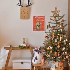 クリスマス飾り/冬のインテリア/クリスマスインテリア/二人暮らし/賃貸インテリア/クリスマスツリー/... クリスマスのインテリア、 少しずつ変えて…