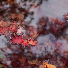 京都/カメラ女子/LIMIAおでかけ部/一眼レフ/紅葉/紅葉狩り/... 写真仲間と京都亀岡へ紅葉狩りに… 日本の…