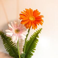 花のある暮らし/ガーベラ/花言葉/花/おしゃれ/暮らし 今週おうちに飾ってるお花  ガーベラ🌼 …
