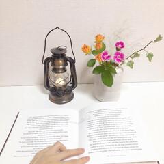 bloomeelife/花のある暮らし/インテリア/ガーデニング/花 Bloomee Life さんからお花を…
