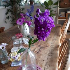 ヒヤシンス水耕栽培/ヒヤシンス/観葉植物のある暮らし/観葉植物インテリア/植物と暮らす/植物棚/... 庭に咲いたお花を部屋に飾っている時が幸せ…(5枚目)