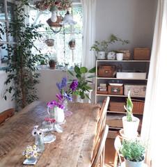 ヒヤシンス水耕栽培/ヒヤシンス/観葉植物のある暮らし/観葉植物インテリア/植物と暮らす/植物棚/... 庭に咲いたお花を部屋に飾っている時が幸せ…(4枚目)