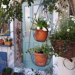 日々の暮らし/ムスカリ/植物と暮らす/植物のある暮らし/ガーデニング/小屋の入口/... 初めましてnakamu-と言います。🌱😊…