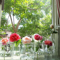 窓辺/薔薇/花のある暮らし/ガラス瓶/はじめてフォト投稿/フォロー大歓迎/... 私の大好きなガラス瓶。ジュースやパスタ、…