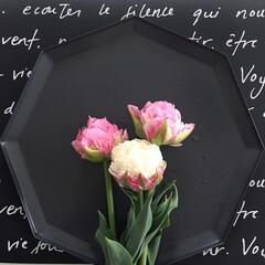 置き画/花のある暮らし/Francfranc/フランフラン/キャンドルプレート/キャンドルトレイ/... イケアのトレイ♡ 本来はキャンドルを置く…(1枚目)