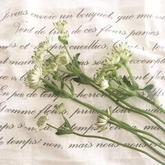 ナチュラルインテリア/インテリア/花言葉/花のある暮らし/花のあるインテリア/暮らし 色んな種類の花が出始めるこの季節 凄く好…