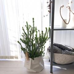 インテリア/インテリア雑貨/インテリア好き/観葉植物/観葉植物のある暮らし/観葉植物インテリア/... エリカの鉢カバーにセリアのビッククリップ…