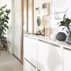 プチプラ/シューズボックス/シューズボックス収納/観葉植物インテリア/観葉植物のある暮らし/インテリア好き/... 雑貨を飾ってる棚はIKEAのシューズボッ…