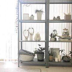 モノトーン雑貨/モノトーン好き/観葉植物のある暮らし/観葉植物インテリア/観葉植物/ディスプレイ棚/... お気に入りの観葉植物や雑貨を置いてある場…