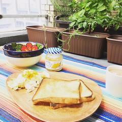 ここが好き/ベランダ/休日/ゴロゴロ/気が付いたら、いちご食べ過ぎ🍓 ベランダで、植木鉢のいちご達を眺めながら…(1枚目)