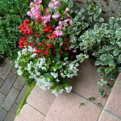 ガーデニングセット GF-362(盆栽道具セット)を使ったクチコミ「♡ガーデニング♡  頂いたお花と葉っぱを…」