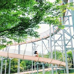 子連れ/遊び場/自然/子供とおでかけ/アウトドア/新緑/... . . 裾野市総合運動公園へ . 青紅葉…