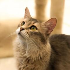 ネコ/猫派/LIMIAペット同好会/にゃんこ同好会/暮らし ネコ派ですฅˆ•ﻌ•ˆฅ♬︎*゜ . 餌…