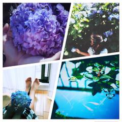 花/梅雨/子供/あじさい/紫陽花/めだか/... . . 紫陽花やらメダカやら . この時…