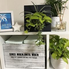 立て掛け/壁掛け/寄せ植え/観葉植物 1カ月くらい前に寄せ植えに挑戦してみまし…(2枚目)