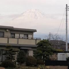 富士山 帰宅後、コアちゃん🐩と散歩に行ってきまし…