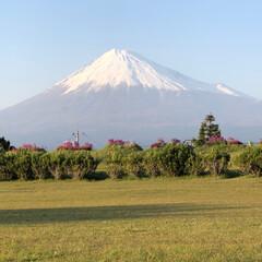 富士山/富士山麓 COAちゃん🐩と散歩🐩〜🚶♂️時の富士…
